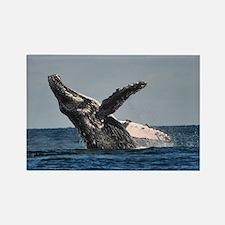 Humpback Whale 2 Magnets