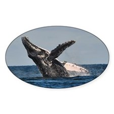 Humpback Whale 2 Decal