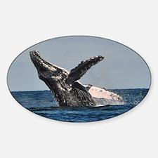 Humpback Whale 2 Decal