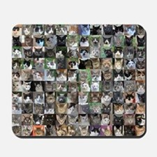 Cat Shelter Jessica's Cats Mousepad