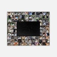 cat shelter jessicas cats picture frame