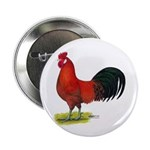 buttercup Rooster 2.25