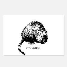 Muskrat Illustration Postcards (Package of 8)