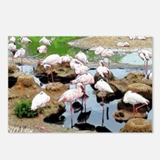 Flamingo City Postcards (Package of 8)