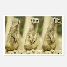 Sweet Meerkat Postcards (Package of 8)