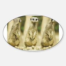 Sweet Meerkat Decal