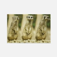 Sweet Meerkat Rectangle Magnet