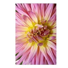 Dahlia Flower Postcards (Package of 8)