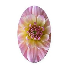 Dahlia Flower Oval Car Magnet