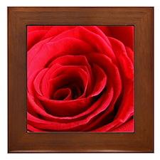 Red Rose Framed Tile