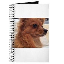 Lolies Journal