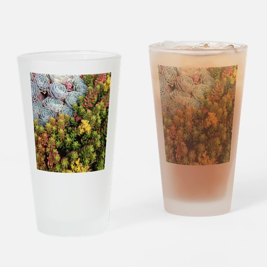 Echeveria and Jelly Beans Drinking Glass