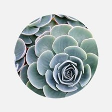 "Echeveria 3.5"" Button"