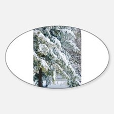 Beautiful trees covered with snow Decal
