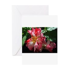 Moments In Time!006.jpg Greeting Cards
