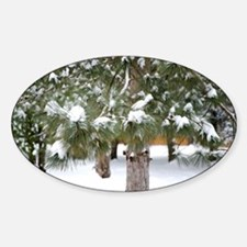 Winter trees 1 Decal