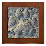 Puma Cougar Track Framed Tile