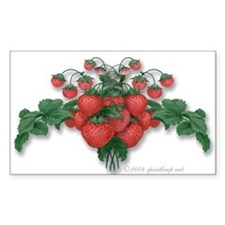 Strawberries! Sticker (Rect.)