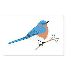 Eastern Bluebird Postcards (Package of 8)