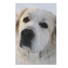 great pyrenees Postcards (Package of 8)