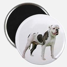 American Bulldog (stnd) Magnet Magnets