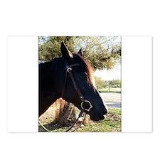 Unique Horses desert Postcards (Package of 8)