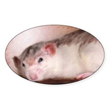 Cute rat painting Decal