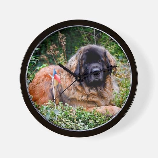 Leonberger Dog Wall Clock