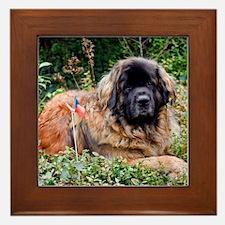 Leonberger Dog Framed Tile