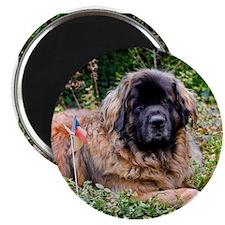 Leonberger Dog Magnet