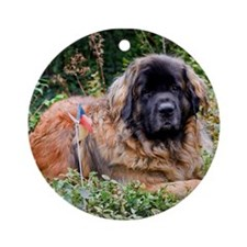 Leonberger Dog Ornament (Round)