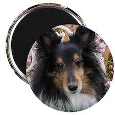 Tricolor Shetland Sheepdog Magnet