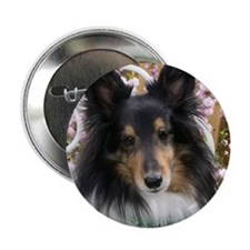 "Tricolor Shetland Sheepdog 2.25"" Button"