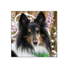 "Tricolor Shetland Sheepdog Square Sticker 3"" x 3"""