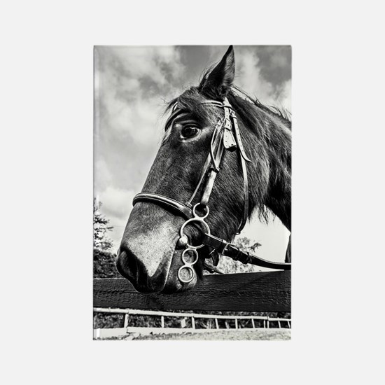 Black and White Pony Rectangle Magnet