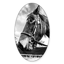 Black and White Pony Decal
