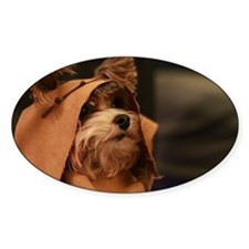 Ewok Poppy Decal