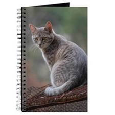 Cat 014 Journal