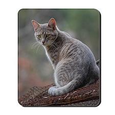 Cat 014 Mousepad