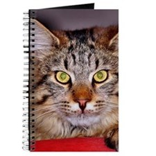 Maine-Coone Cat Journal