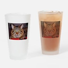 Maine-Coone Cat Drinking Glass