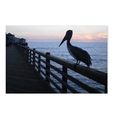 pelican at sunset Postcards (Package of 8)