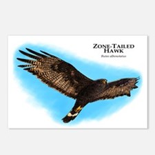 Zone-Tailed Hawk Postcards (Package of 8)