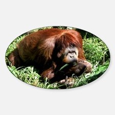 Helaine's Orangutan Oval Decal