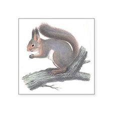 """Vintage Squirrel Square Sticker 3"""" x 3"""""""