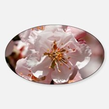 Cool Almond blossom Decal