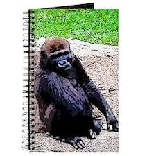 Little Kong Journal