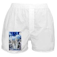 Crocus in infrared sunlight Boxer Shorts