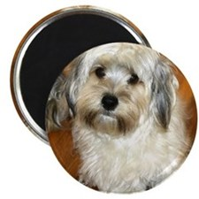 Morkie Magnets