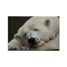 Polar bear 011 Rectangle Magnet